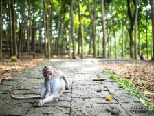 The Sacred Monkey Forest in Ubud, Bali, Indonesia