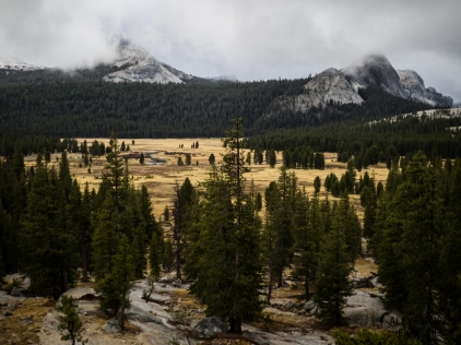 Tuolomne Meadows - Yosemite National Park